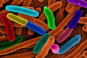 как почиститься от паразитов в домашних условиях